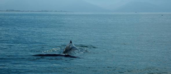 whaleofatail4
